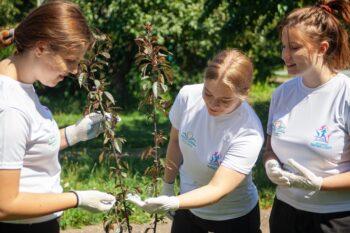 «Строгинское яблоко»: как волонтеры школы № 1155 ухаживают за уникальным яблоневым садом